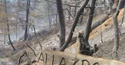 Vivaio Forestale Abruzzo : Montagne dabruzzo: il rimboschimento costerà 300 milioni pescara
