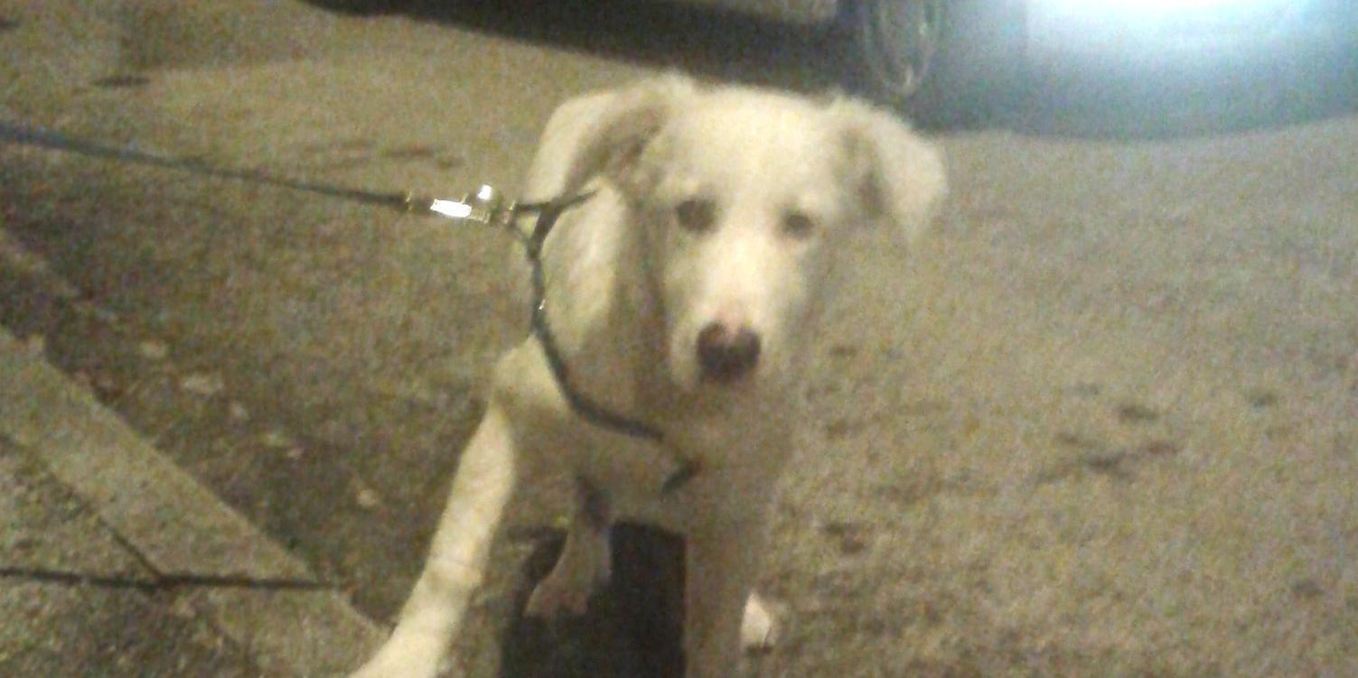 Il cucciolo quando venne trovato in strada (foto Lida)