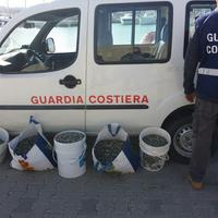 Vongole sequestrate dalla guardia costiera