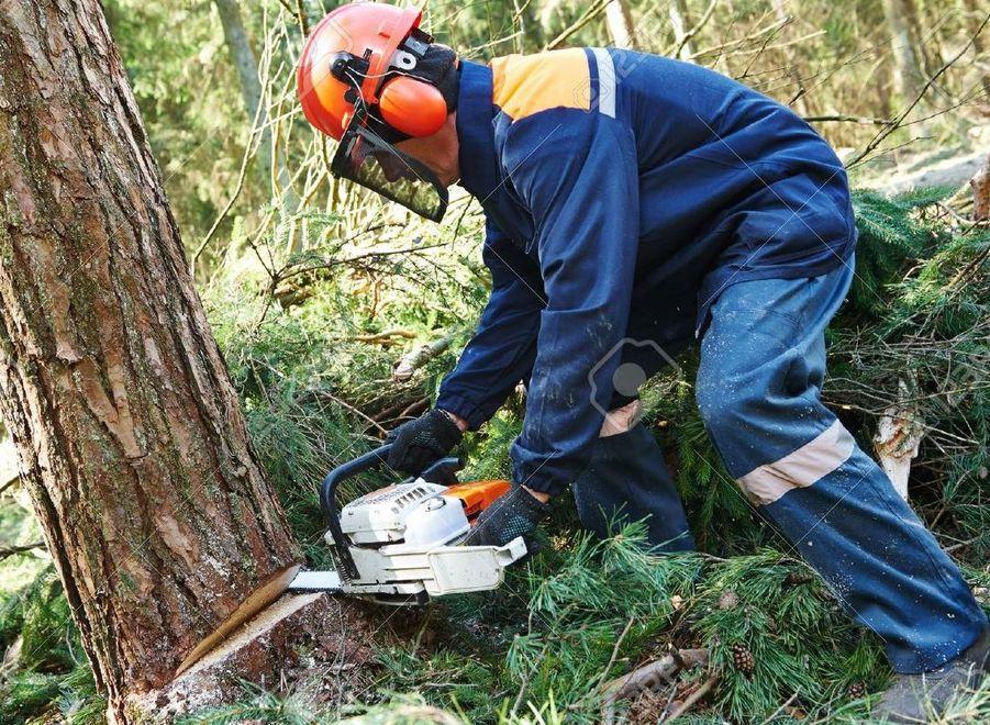 Vivaio Forestale Abruzzo : L ex vivaio forestale torna al comune