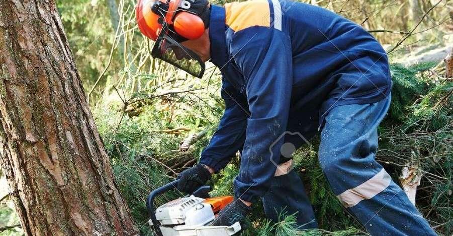 Vivaio Forestale Abruzzo : Boschi poco sfruttati: labruzzo importa legna pescara il centro